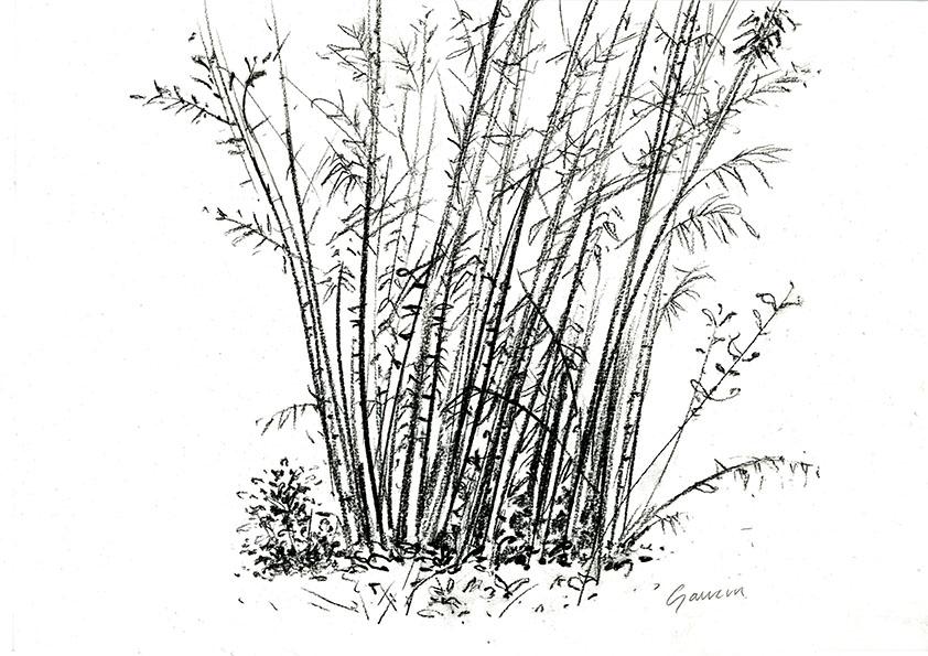 gaucin-2012-bamboos